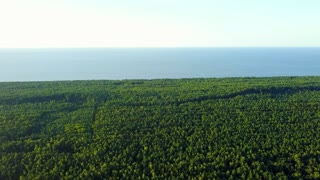 Aerial panorama of spacious green surface of coniferous tree tops arranging enormous area of woods on baackground of blue sea.