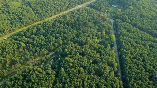 Aerial shot of crossed road and pathway running through rural area of green coniferous woods in bright summer sunlight.