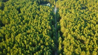 Aerial shot taken with drone of small farmland deep in green evergreen woods with rural road running near in sunlight.