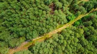 Aerial shot taken with drone showing summer green forest with unpaved roadway running through coniferous trees in sunlight.