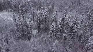 Amazing view from drone of spacious forest with coniferous trees under white frost in gloomy weather of winter in Poland.
