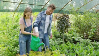 Content man and pretty girl holding watering pot together and pouring fresh water on flowerbed with green plants in glasshouse.