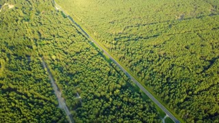 Drone aerial shot of green tree tops surface of evergreen woods and rural roads running through forest in summertime.