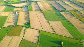 Drone shot of beautiful nature pattern of green spacious terraces on agricultural plantation in summer bright sunlight.
