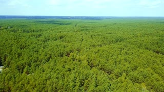 Drone shot of top surface of coniferous trees in panoramic view of endless green woods in summertime under blue sky and sunlight.