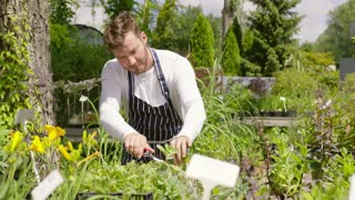 Horizontal outdoors shot of professional male gardener taking care and cutting the plants in the garden.