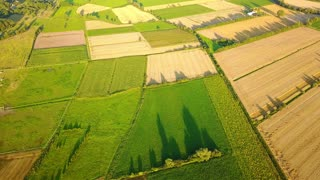 Picturesque aerial drone shot of green terraces pattern on farming land with growing trees in bright summer sunlight.