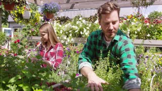 Professional male and female horticulture workers taking care and seeding plants in the garden together.