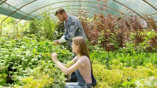Side view of man and woman cultivating green fresh plants in greenhouse working in team and chatting.