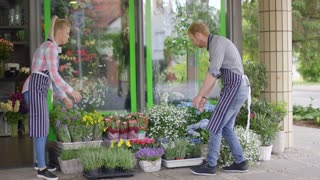 Side view of young man and woman wearing aprons and helping each other while working outside of flower shop and arranging flowers.