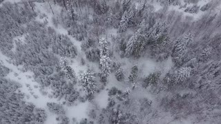 View from drone of tranquil evergreen woods in white snow with narrow river flowing among trees, Poland.
