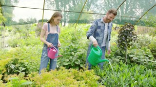 Young man and woman taking care of plants and watering with pot in hothouse together.