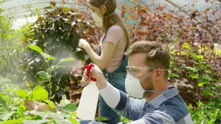 Young man and woman wearing respiratory masks and spraying green plants with chemicals working in glasshouse.