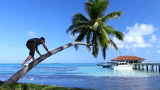 Young Man Climbing on Palm Tree on the Beach