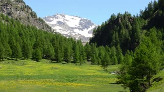 Alpine meadow green and blooming on the background of snow-capped peaks of Alps