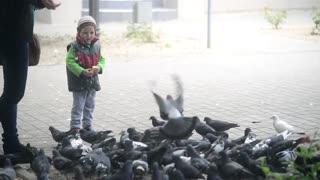 Boy feeding pigeons with bread