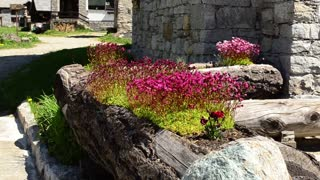 Flowers of the village in the Italian alps