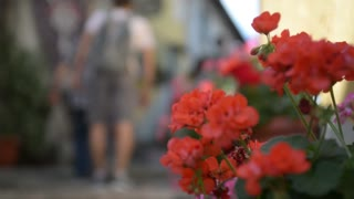 flowers on the streets of the old Italian town