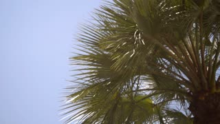 Green palm on the background of the summer sky