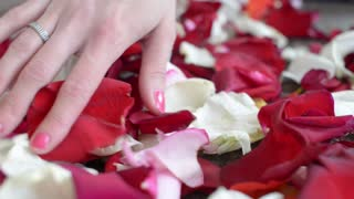 Hand shakes Rose Petals red and white on the Floor