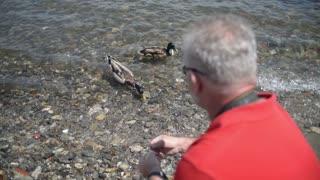 man feeding the ducks on the lake
