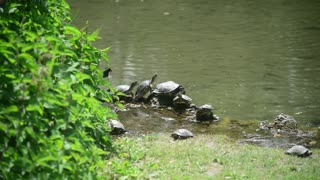 Milan, Italy - park Sempione - turtles bask in the sun