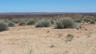 Namibia , Africa - a landscape with sparse vegetation