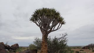 Namibia, Africa - a unique savanna vegetation , flora and fauna