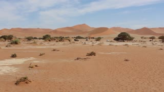 Namibia, Africa - desert landscape and rare trees, car rides away