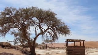 Namibia, Africa - desert landscape and wide spreading tree