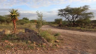 Namibia, Africa - nice varied vegetation, trees, grass and bushes