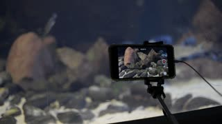 A Man recording a Video with iPhone in Underwater Aquarium with exotic Fishes