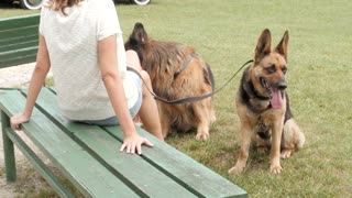 A Woman with two Dog German Shepherds sitting on a Bench in Park - Summer Day