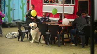 Family sits with big white Dog in a Autumn Park Food Cafe - Wroclaw
