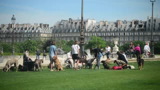 Many people with dogs on grass walking near the Palace of the Tuileries in Paris
