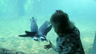 Penguins Swimming Next To Kid Girl behind the Glass In Aquarium