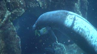 People under water Make Photo - Oceanarium And Underwater Zoo in Genova Italy