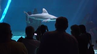 People under water Make Photo of a Shark - Oceanarium And Underwater Zoo in Genova Italy