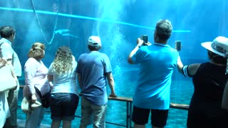 People under water Make Photo with Dolphins - Oceanarium And Underwater Zoo in Genova Italy