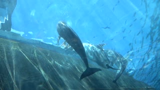 People under water Make Photo with Mobile Smart Phone of Dolphin - Oceanarium And Underwater Zoo in Genova Italy