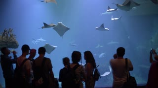 People Visitors watching amazing Underwater Aquarium With Sharks and Cramp-Fish