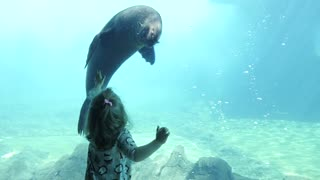 Seal Swimming Next To Kid Girl behind the Glass In Aquarium