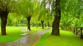 Bench in the Park, rain, green foliage.