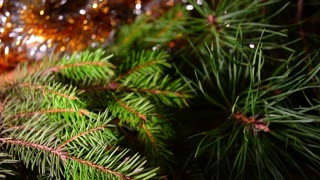 Christmas background, fir tree branches