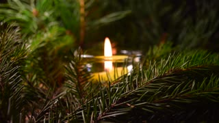 Christmas light, tree branches