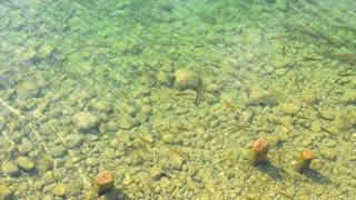 Fish under water.
