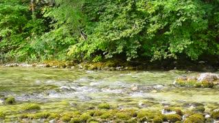 Forest stream, water flow.