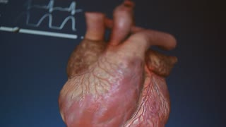 Human heart, medical video background