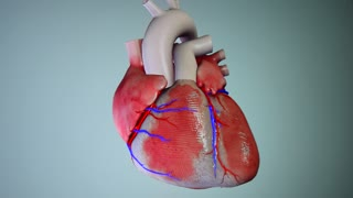 Human heart in 3D