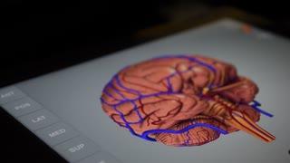 Human brain 3D-app.